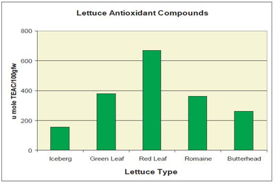 Antioxidant content of some types of lettuce.