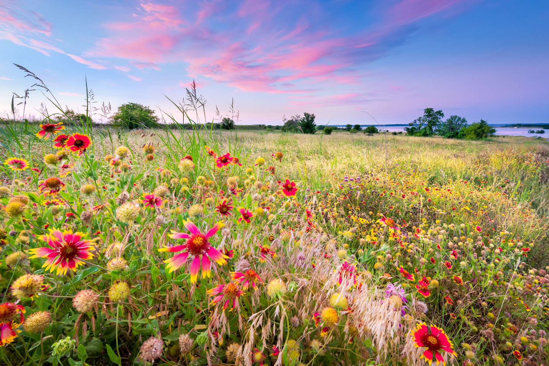 wildflowers are ideal for a natural less formal garden a planting of wildflowers provides a changing palette of color the word wildflower does not - Wildflower Garden