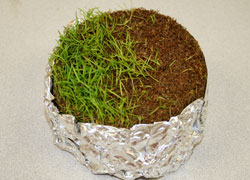 Turf Sample