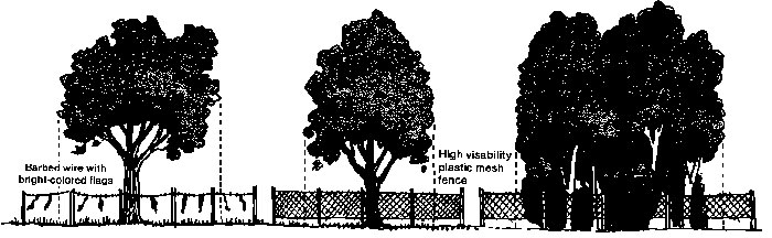 Figure 3: Ideally, the protection barriers should extend beyond the dripline. Reprinted with permission from Tree City USA Bulletin No. 7, National Arbor Day Foundation.