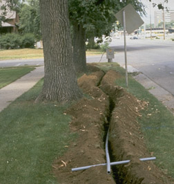 Protecting Trees During Construction 7 420