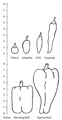 Pepper fruit types