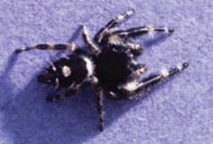 Spiders In The Home 5 512 Extensionextension