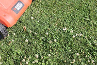 If flowering weeds are present lawns should be mowed before application of insecticides to reduce risks to pollinators.