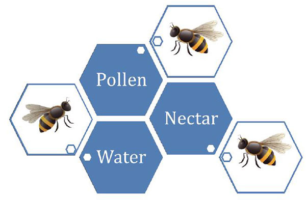 bees need pollen, nectar and water