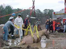 Rescue workers free a horse caught in mud after a storm.