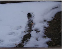 Vole hole and runway in snow. Note the oval-shaped OPEN hole.