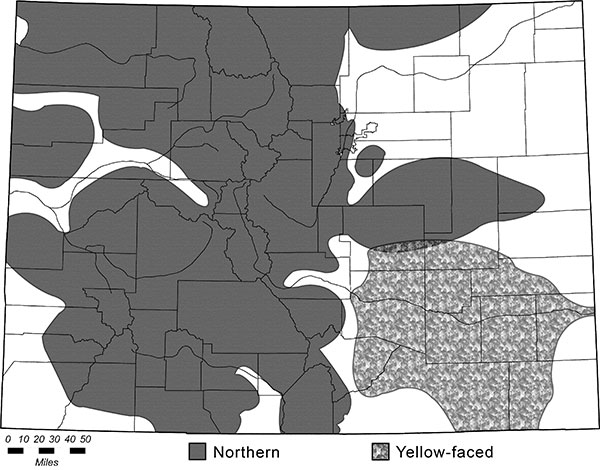 Distribution map of Northern (Thomomys talpoides) and Yellow-faced (Pappogeomys castanops) pocket gophers.