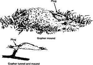 Mound and tunnels