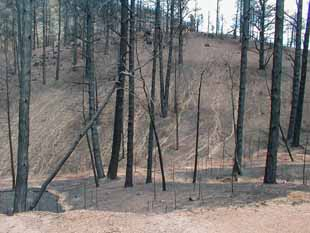 the effects of fire on soil and water Impacts of fires is that biomass burning is a significant source of greenhouse  gases responsible  of fire on soil water repellence has been recently  published.