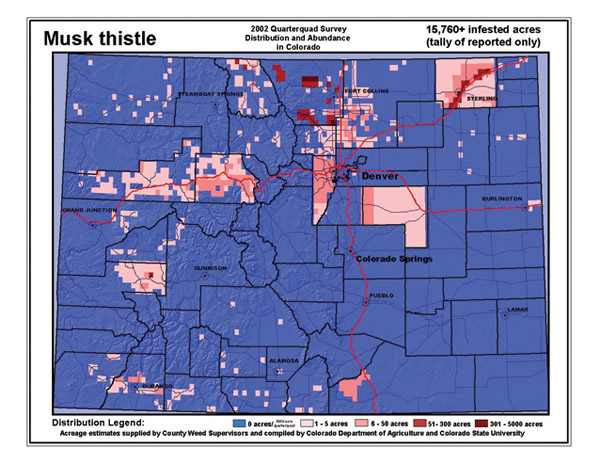 Musk thistle distribution in Colorado,  2002.