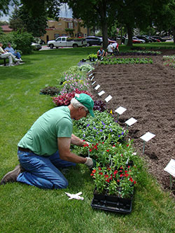 Planting at the Trial Gardens - photo by Craig Seymour