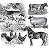 Flood Resources - Planning - Livestock