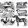 Livestock Disaster Resources