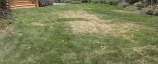 Dry spot in lawn