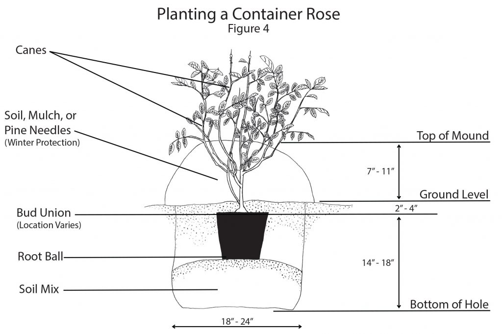 Planting container Rose