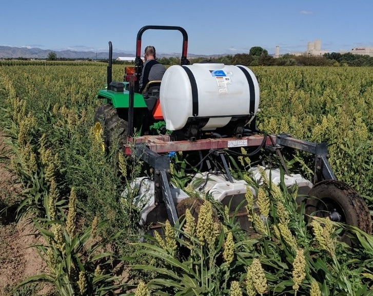 Shielded-sprayer applying caprylic/capric acid-based herbicide to weeds growing in a milo crop