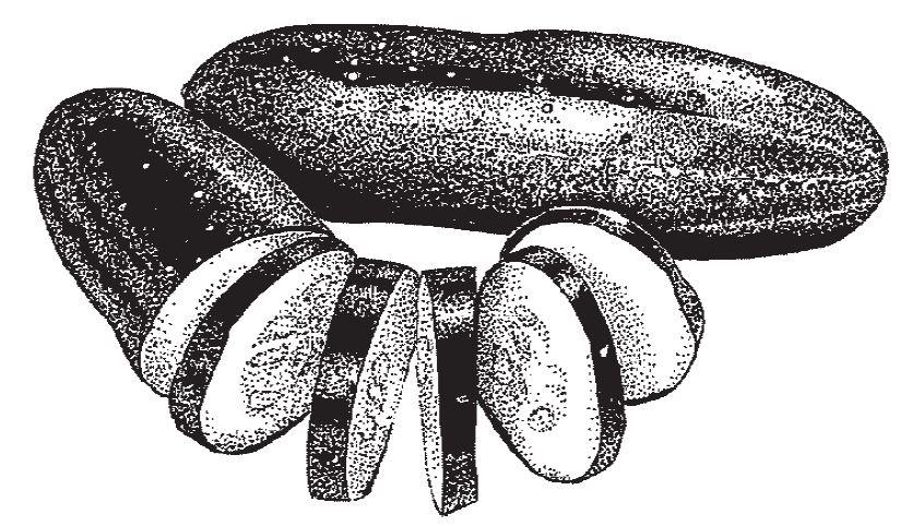 Cucumber drawing