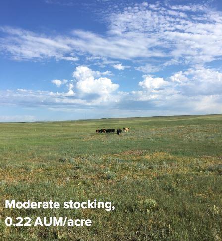Moderate Stocking